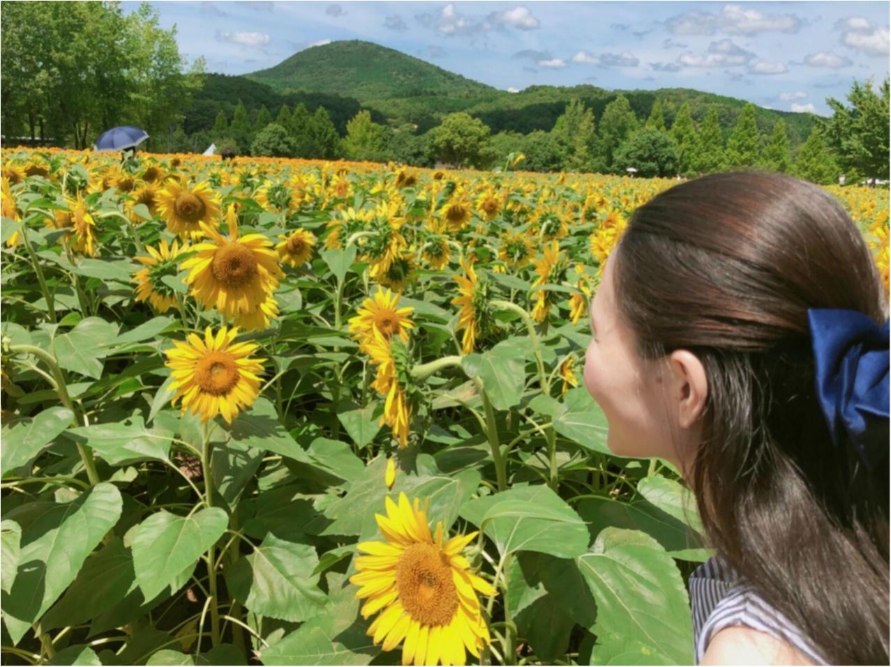 美しい夏の絶景♡ 100万本のひまわりが一面に広がる『ひまわり畑』が見たい♡♡_6