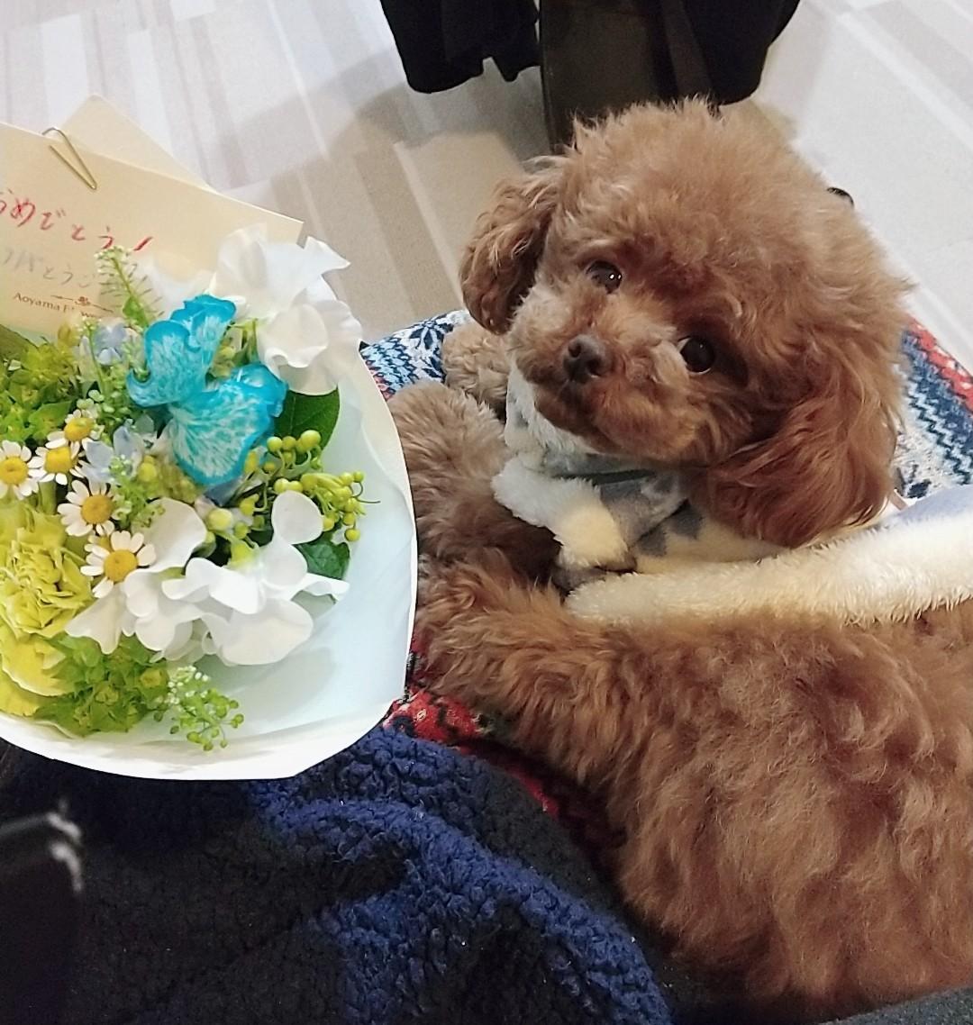 【今日のわんこ】テテちゃんが2歳に! お花にきゅん♪_1