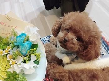 【今日のわんこ】テテちゃんが2歳に! お花にきゅん♪