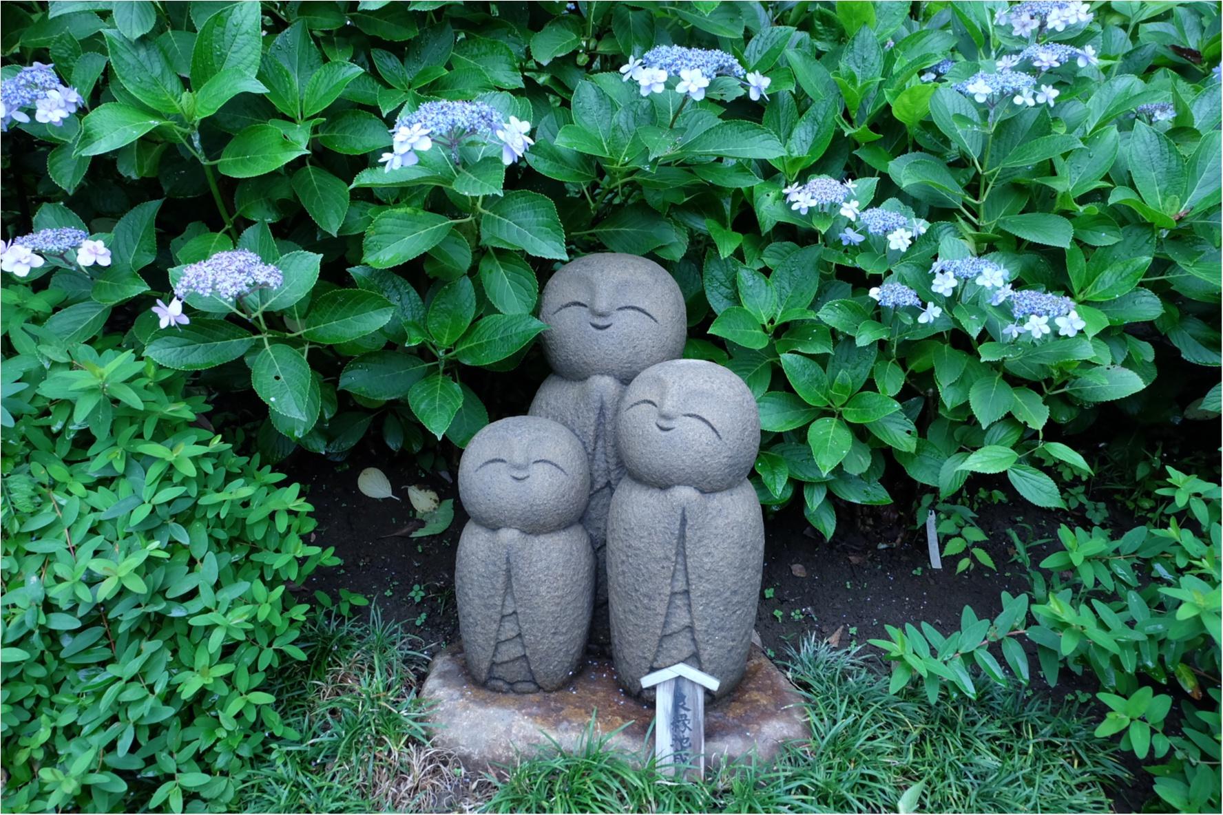 今だから見れる!鎌倉の紫陽花で映える写真を撮ろう♡混雑を避けるには?_6
