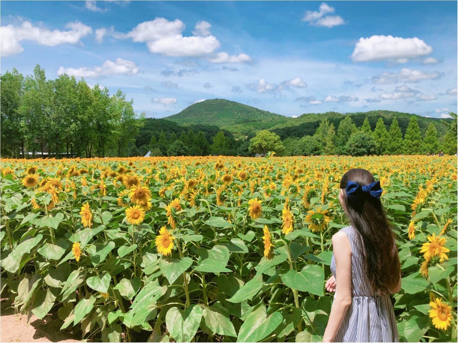 美しい夏の絶景♡ 100万本のひまわりが一面に広がる『ひまわり畑』が見たい♡♡_2