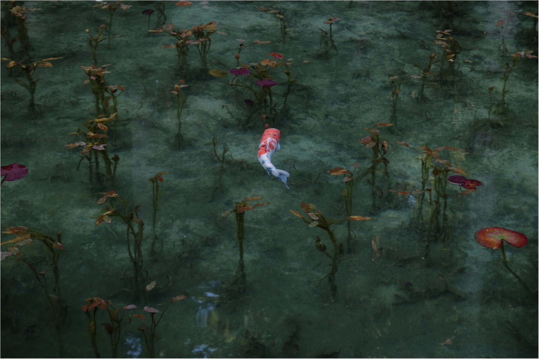 …ஐ オススメスポット✌︎あの【モネの池】が、岐阜県に実在した?! ஐ¨_2