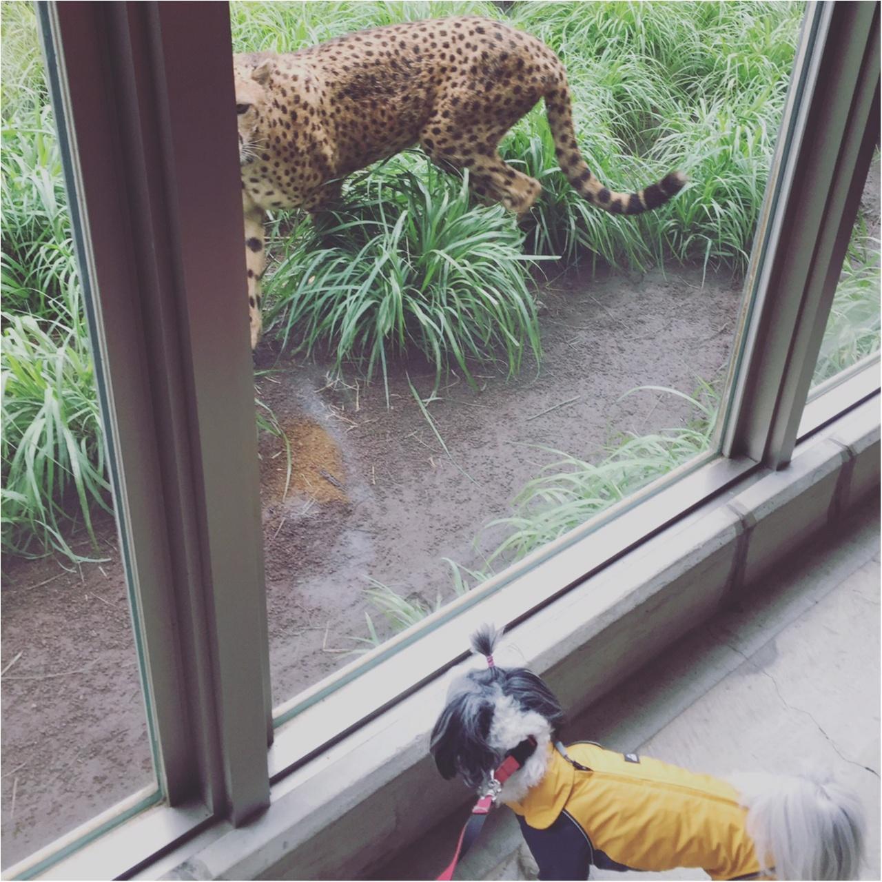 【今日のわんこ】ドキドキ♥ 太郎くん、動物園に行く!_1