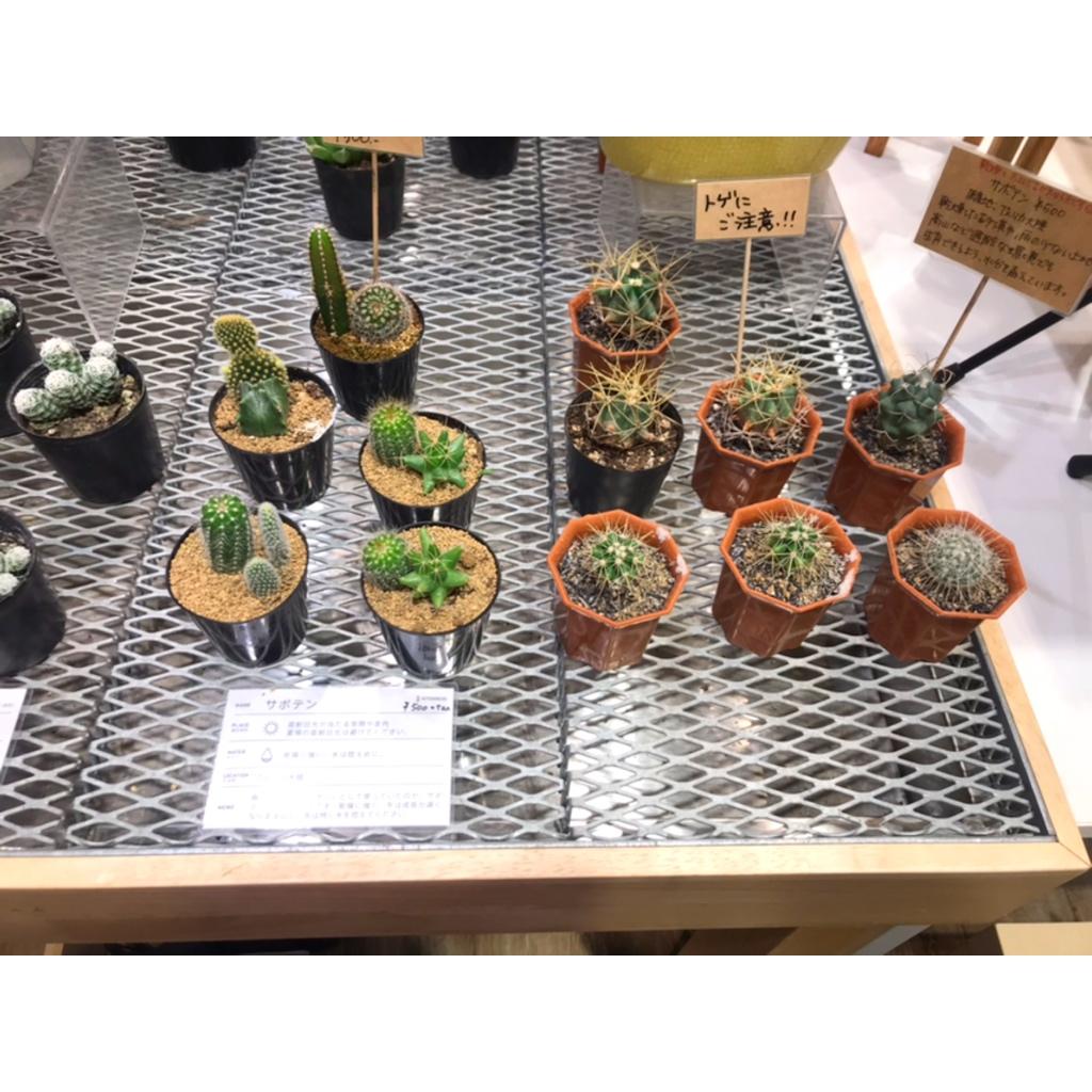 【インテリア】観葉植物のあるお部屋でリフレッシュ空間を作る!HITOHACHI紹介!_3