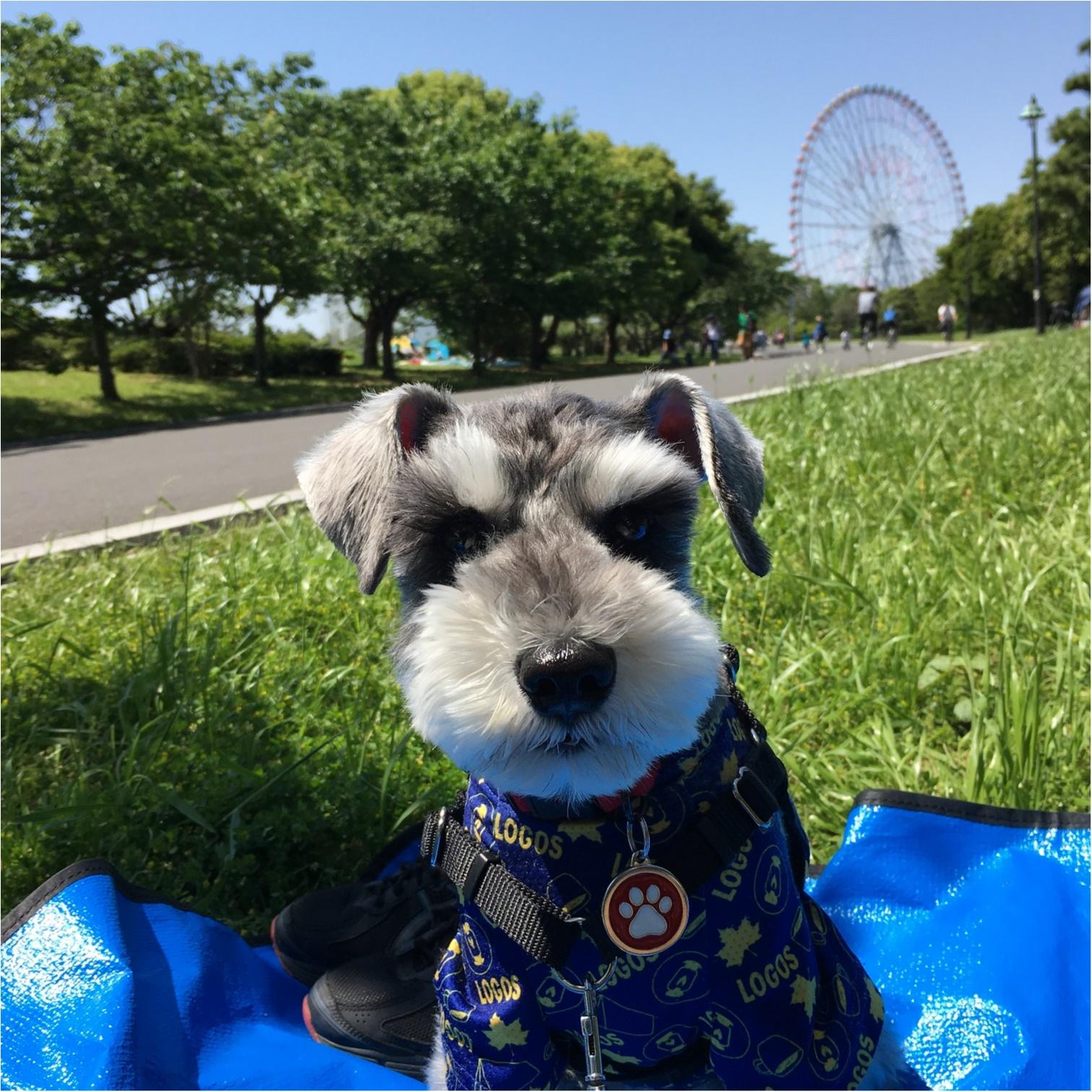 【今日のわんこ】ピクニック日和♡ 公園に出かけたサクラちゃん_1