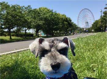 【今日のわんこ】ピクニック日和♡ 公園に出かけたサクラちゃん