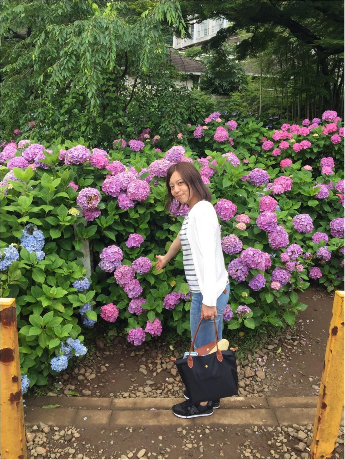 【箱根旅】綺麗すぎる紫陽花に思わず途中下車*写真を撮るなら絶対ココ!_1