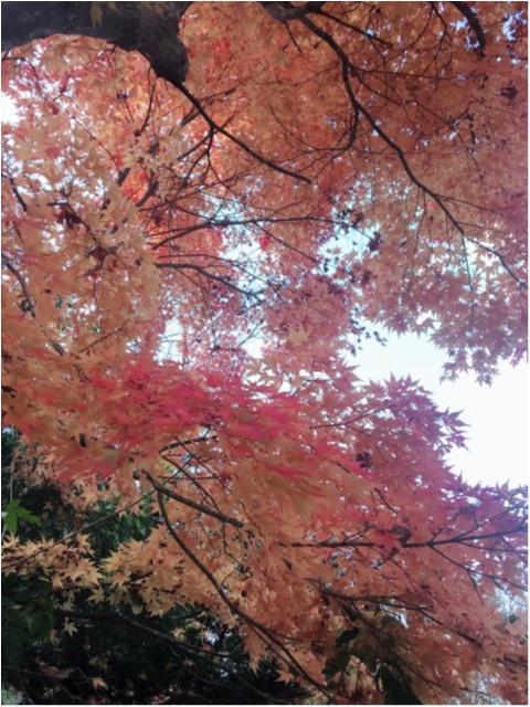 紅葉シーズン!!到来!!北海道の見頃は終わってしまいましたが…公園にいけば、もう少しだけ秋を感じられそうです♡_2