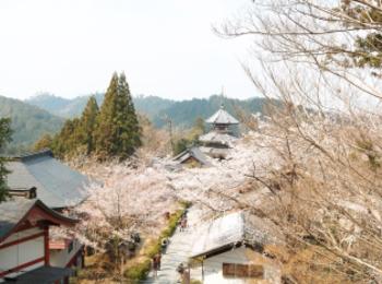 平成最後の桜です