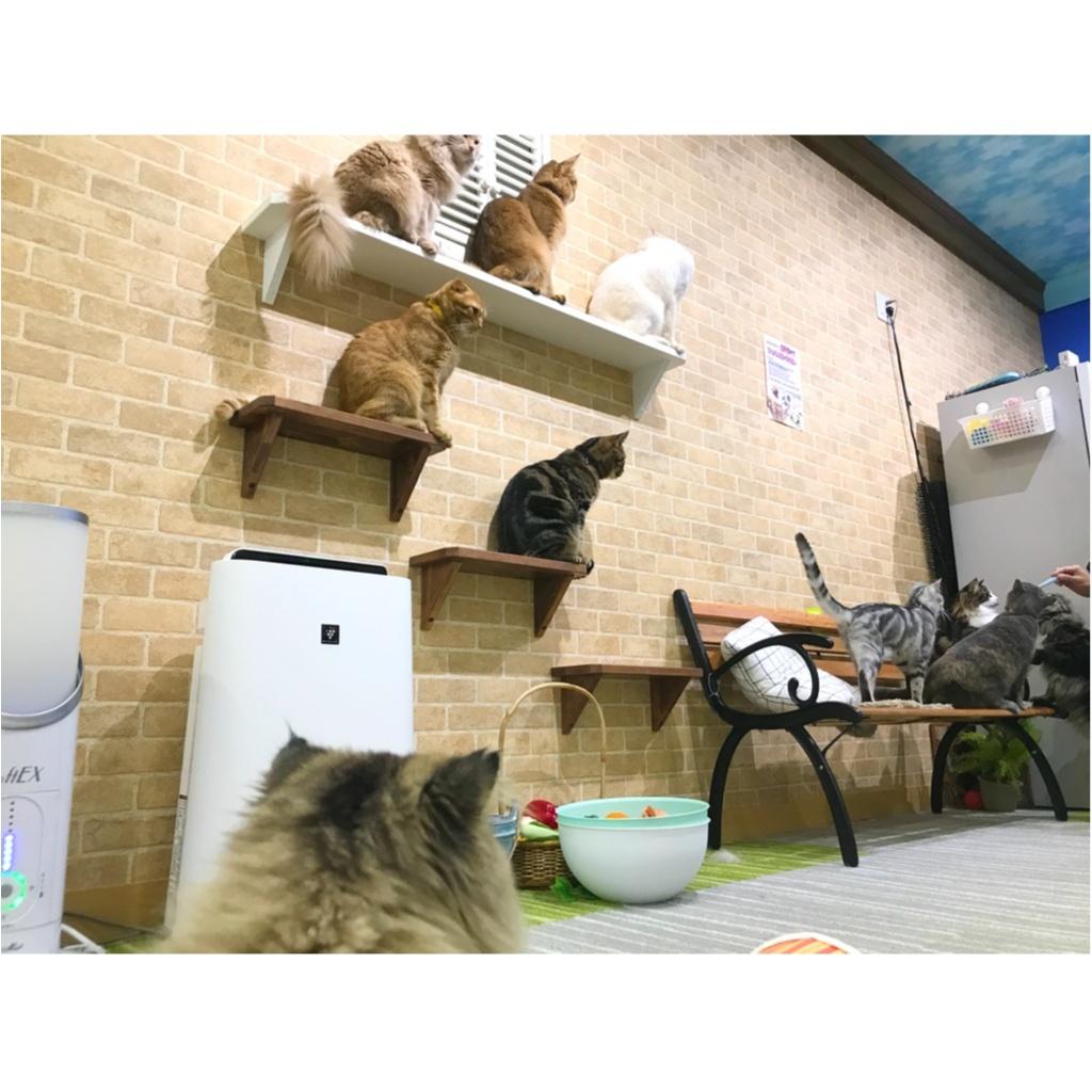 【空前の猫ブーム】首都圏内オススメの猫カフェ教えちゃいます!@横浜店レポ_5