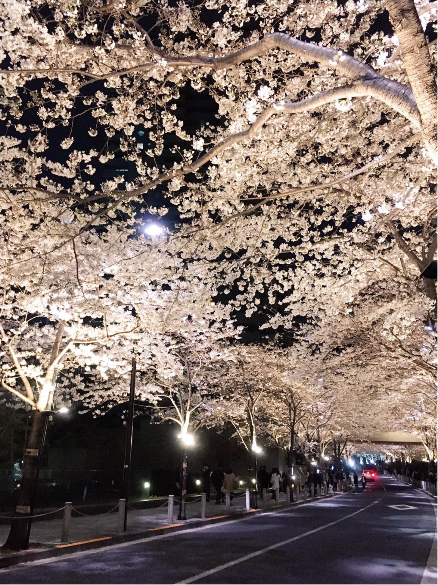 夜桜はしごしました♡六本木〜千鳥ヶ淵_3