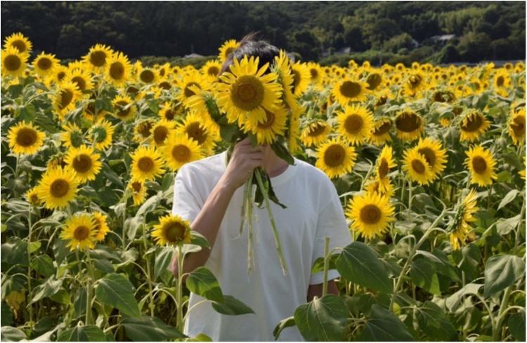 【ジェニ旅】東京ドーム2個分のひまわり畑!! 『益子ひまわり祭』で平成ラストサマーを全力で楽しむ♡_6