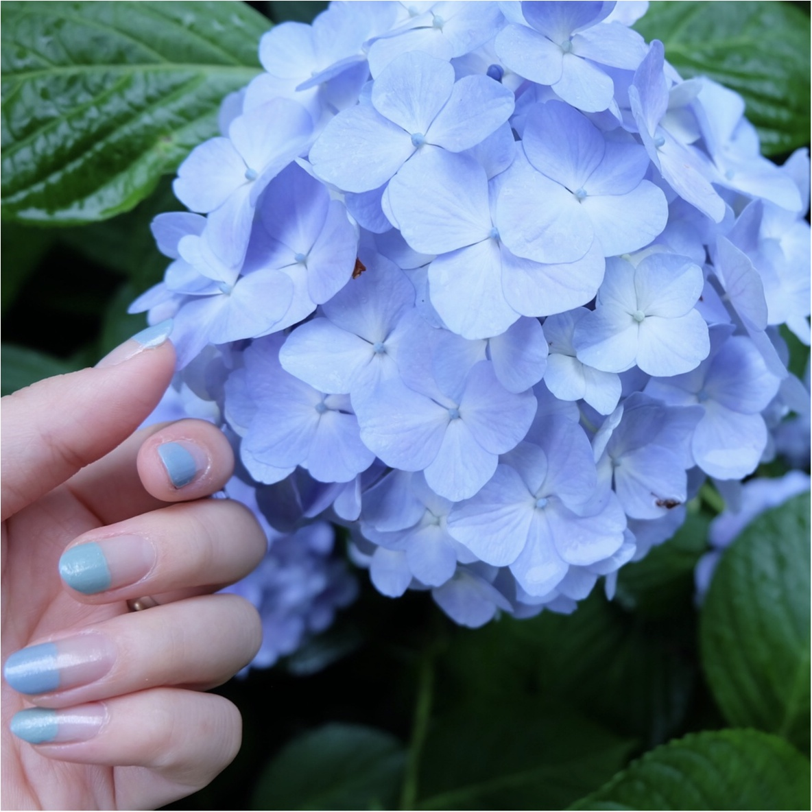 今だから見れる!鎌倉の紫陽花で映える写真を撮ろう♡混雑を避けるには?_5