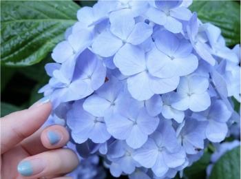 今だから見れる!鎌倉の紫陽花で映える写真を撮ろう♡混雑を避けるには?