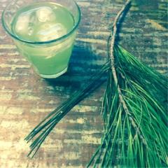 日本のスーパーフード「松の葉」の簡単茶でお通じもお肌も快調!