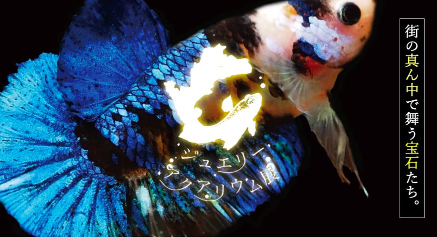 日本初のカフェ型水族館「ジュエリーアクアリウム」が、『イオンレイクタウンKaze』に限定オープン!_1