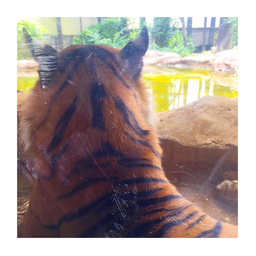 *5月の上野動物園*_3