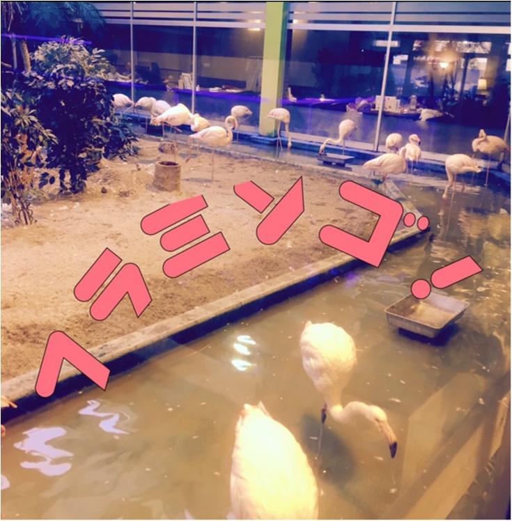 【福島の旅v1】驚愕‼︎フラミンゴが沢山いるカフェで蟹を食べるの巻。_2