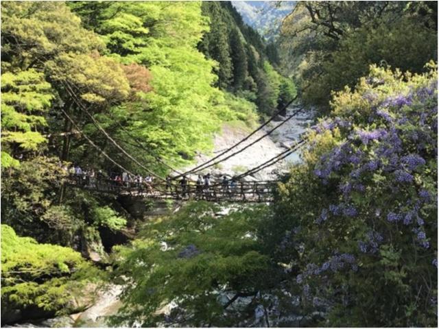 【一度は行きたい日本の絶景】徳島・祖谷のかずら橋_6