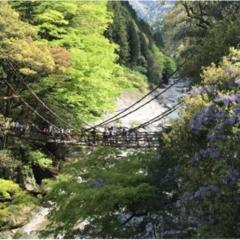 【一度は行きたい日本の絶景】徳島・祖谷のかずら橋