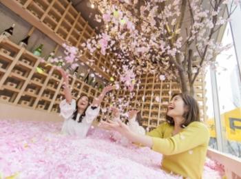 花びら120万枚の「桜プール」の中で乾杯! 表参道に「SAKURA CHILL BAR by 佐賀」登場。ブランド苺「いちごさん」も楽しめる♡【#桜 2019 15】