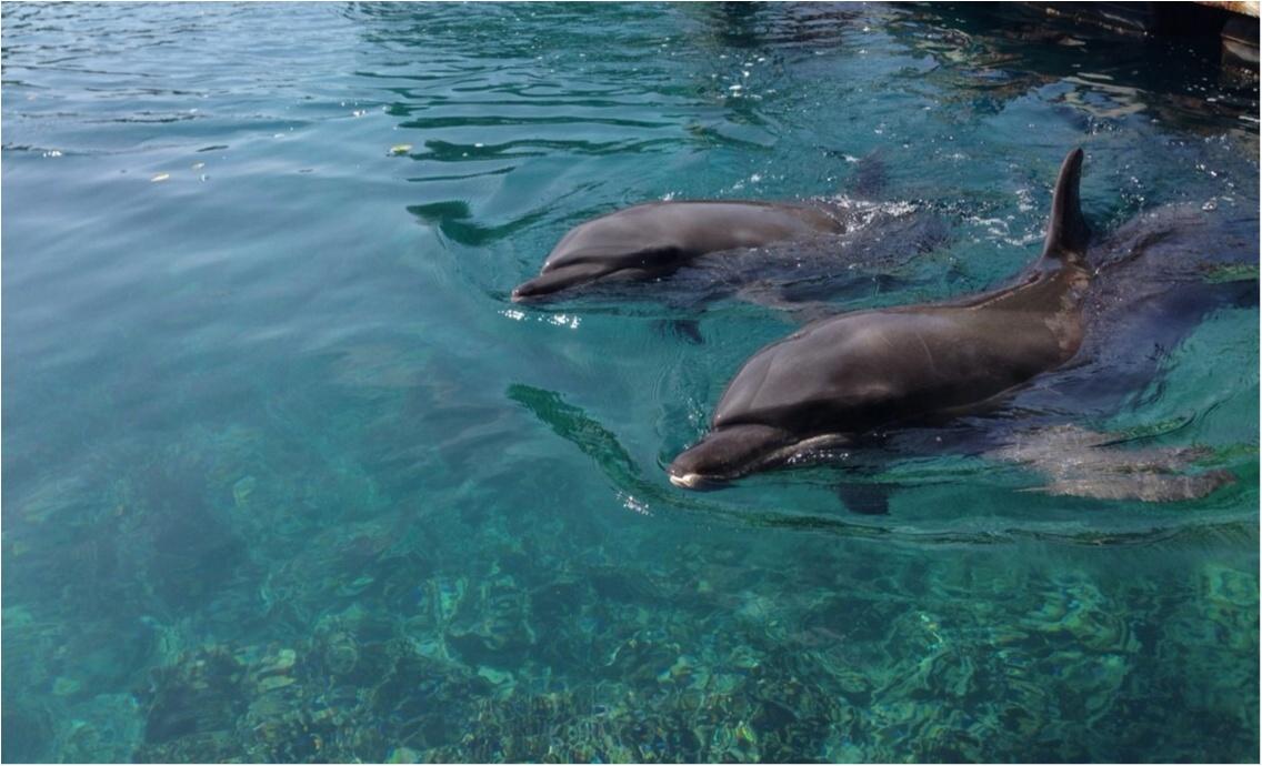 【travel】パラオでイルカに乗ろう~死ぬまでにやりたいことの1つ~_2