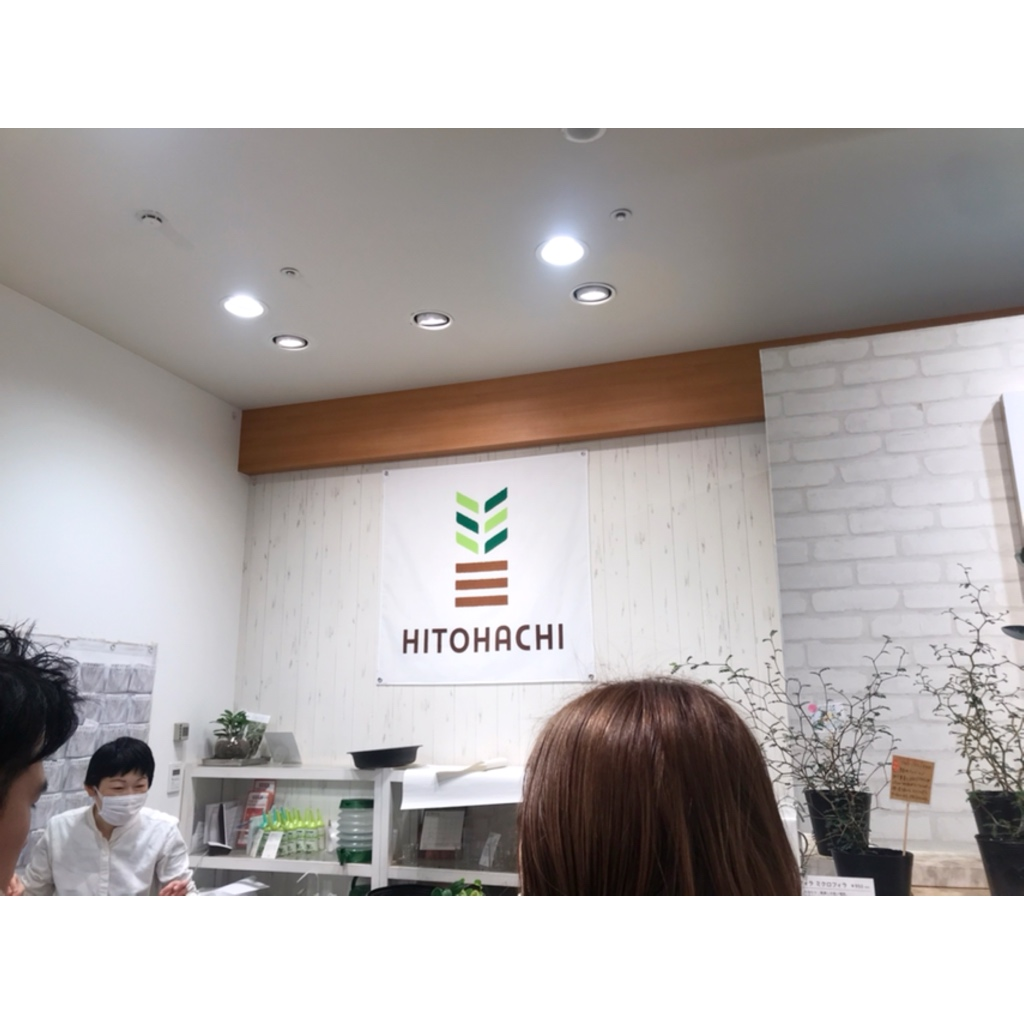 【インテリア】観葉植物のあるお部屋でリフレッシュ空間を作る!HITOHACHI紹介!_4