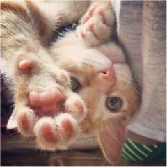 【今日のにゃんこ】ぼく強いんだから! ぽぽくんの猫パンチがさく裂★