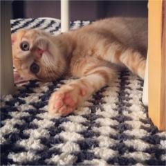 【今日のにゃんこ】子猫のぽぽくんは、かくれんぼに夢中♡