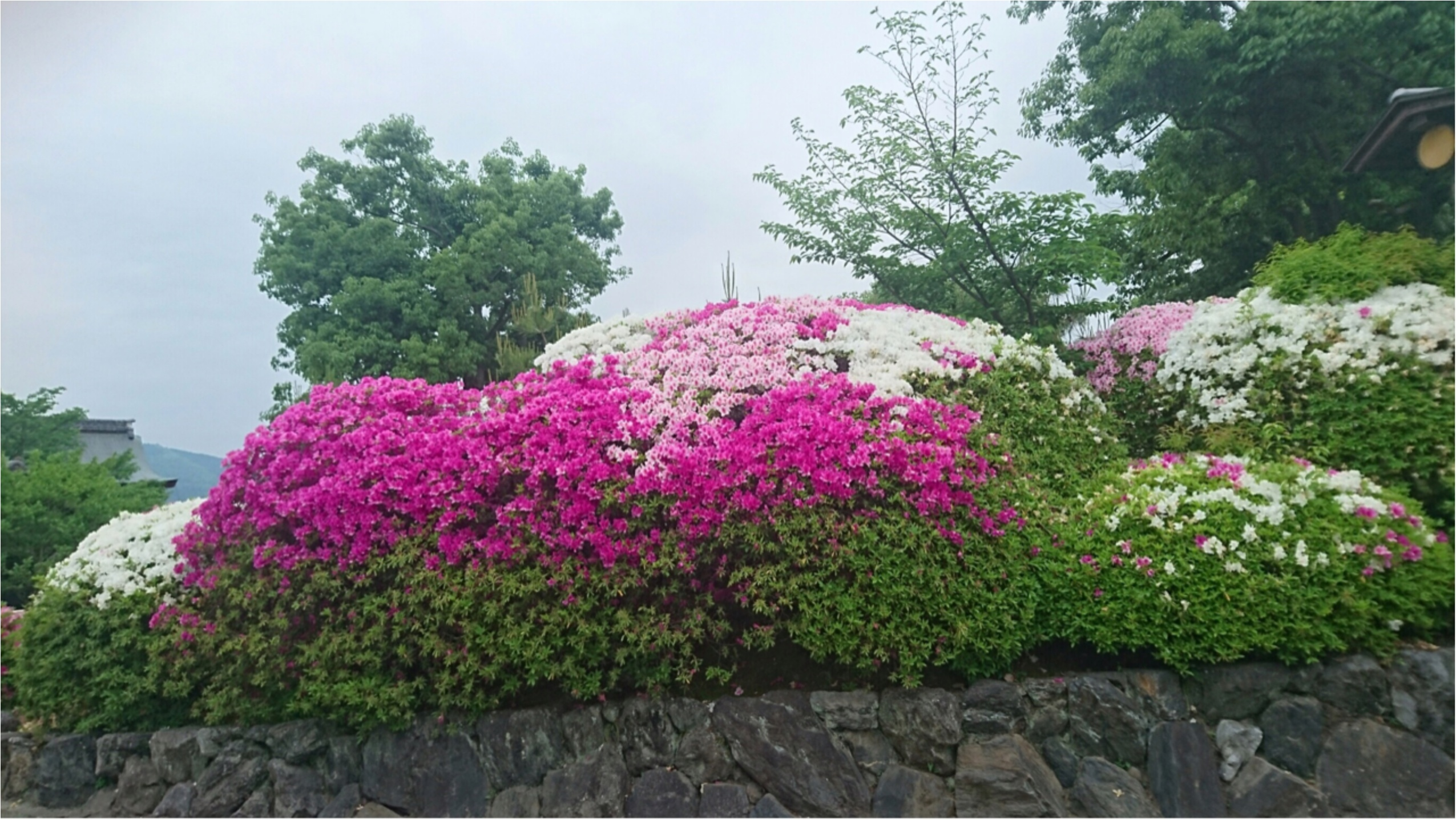 桜と紅葉だけじゃない!京都・嵐山のGW注目ポイントとは?_3