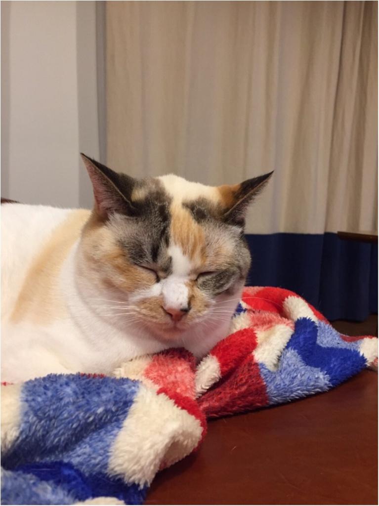【今日のにゃんこ】ゆきちゃんは、大好きブランケットとうたた寝中♡_1