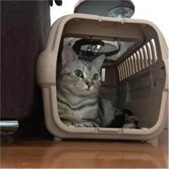 【今日のにゃんこ】美猫アランくんはキャリーで考え事♡