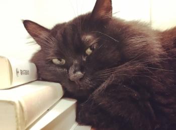 【今日のにゃんこ】「もう仕事するにゃん?」と少々不機嫌なゆらちゃん。