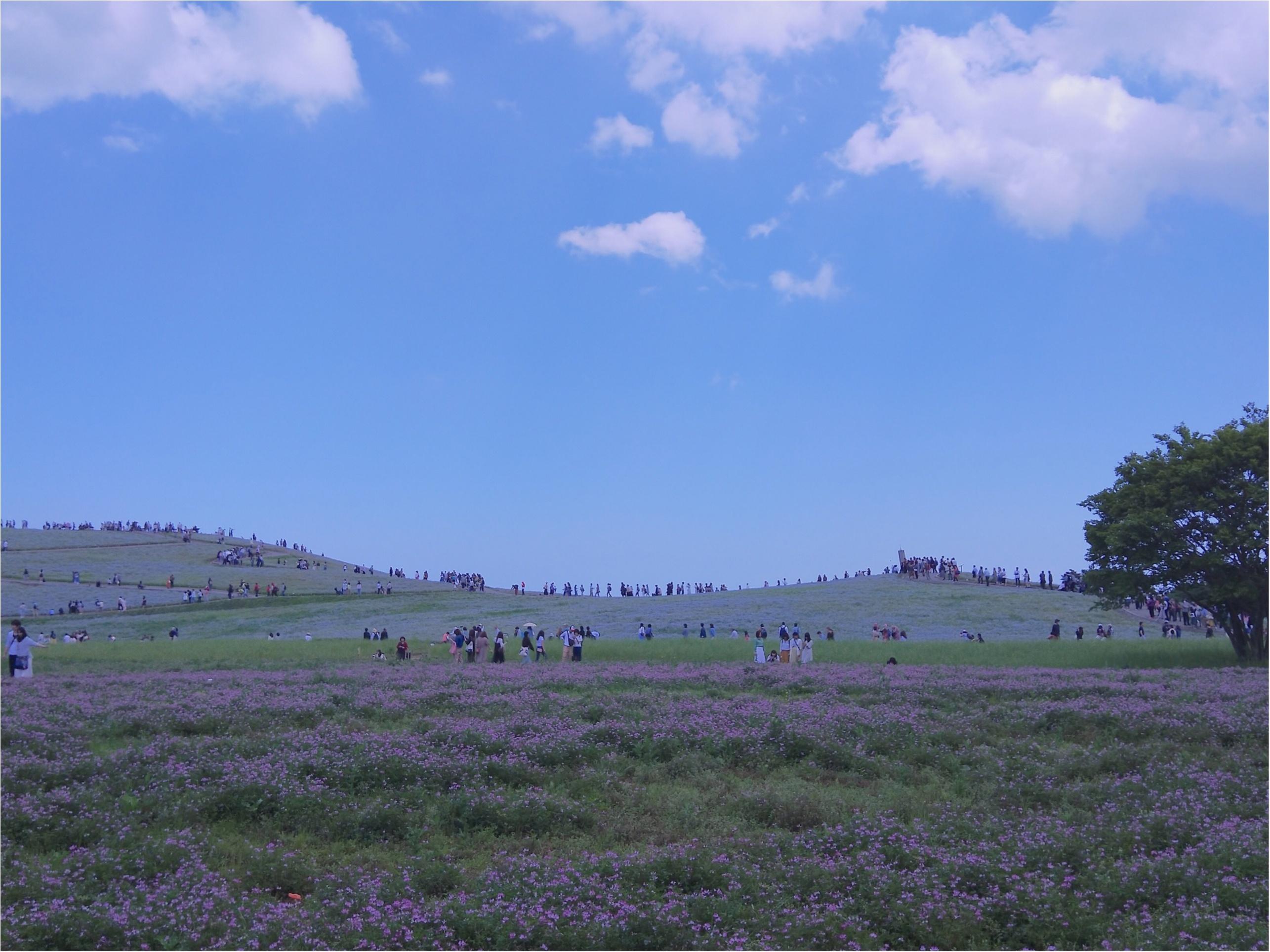 丘一面に広がる青い絨毯「ネモフィラ」観賞と新鮮な海鮮丼を食すバスツアー✨_1_4