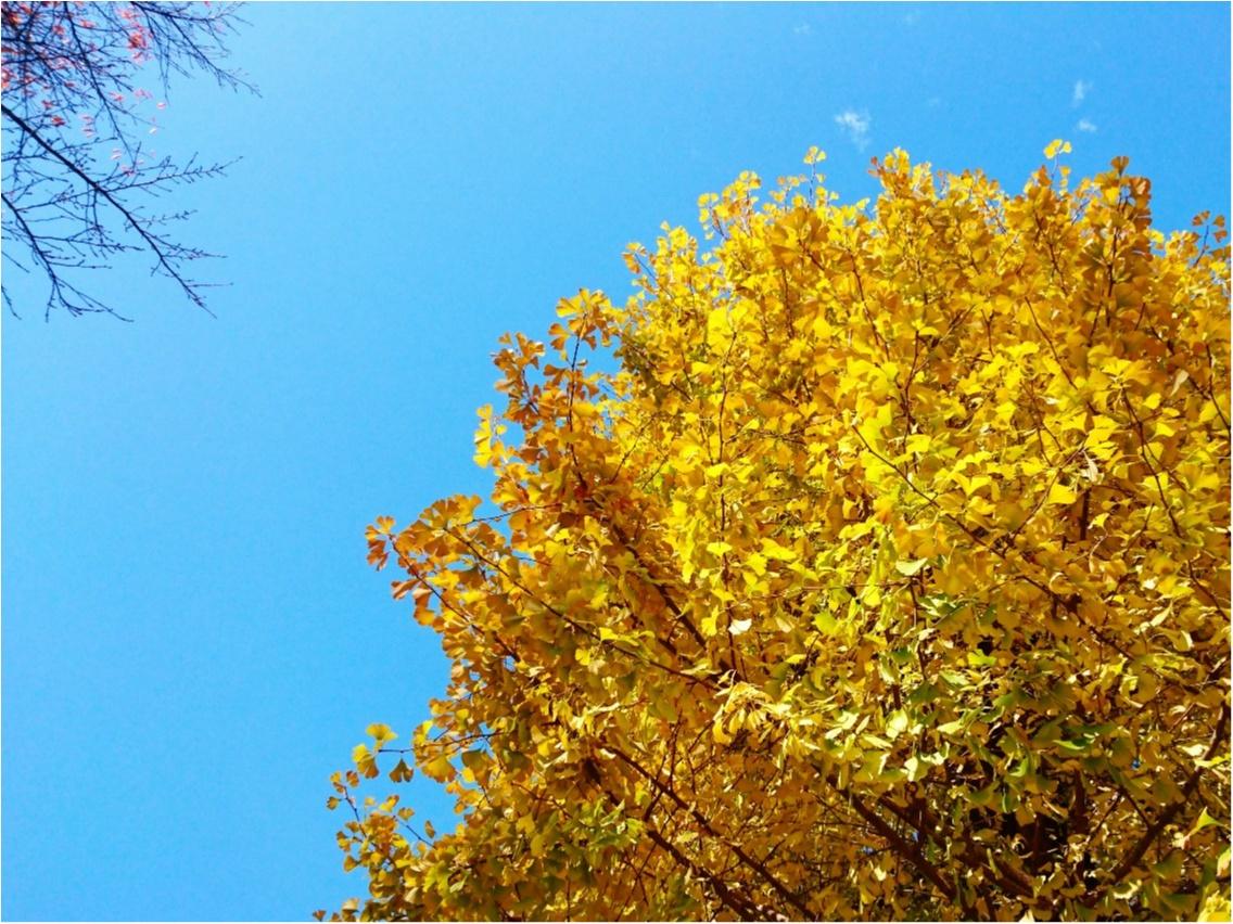 【コスメ】冬のケアこそ、香り高いアイテムで♪ MARKS&WEB『ハーバルオイル マンダリン』_1