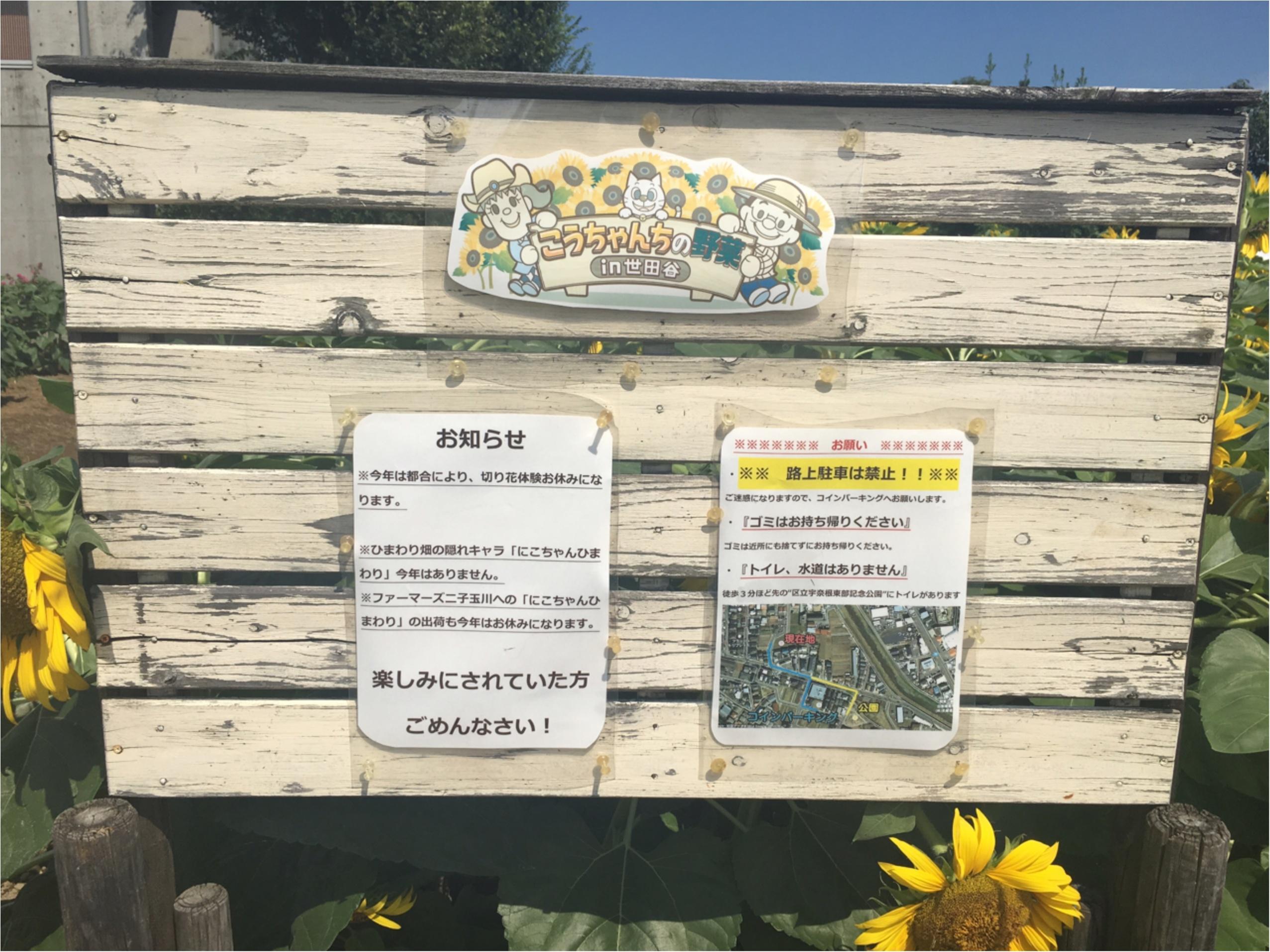 東京・世田谷にひまわり畑があるって知ってた?なんと2万本ものひまわりが!_2