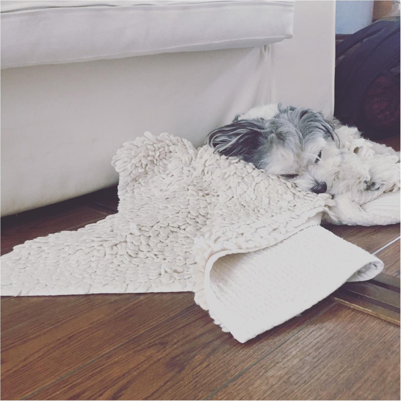 【今日のわんこ】ベッドより快適!? 〇〇の上で寝るのが好きな太郎くん_1