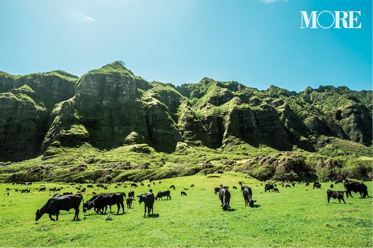 「ハワイの絶景スポット」4選♡ カイルアビーチを見下ろす高台や、話題のパワースポットなど、大自然に癒される旅行をしよう!_2