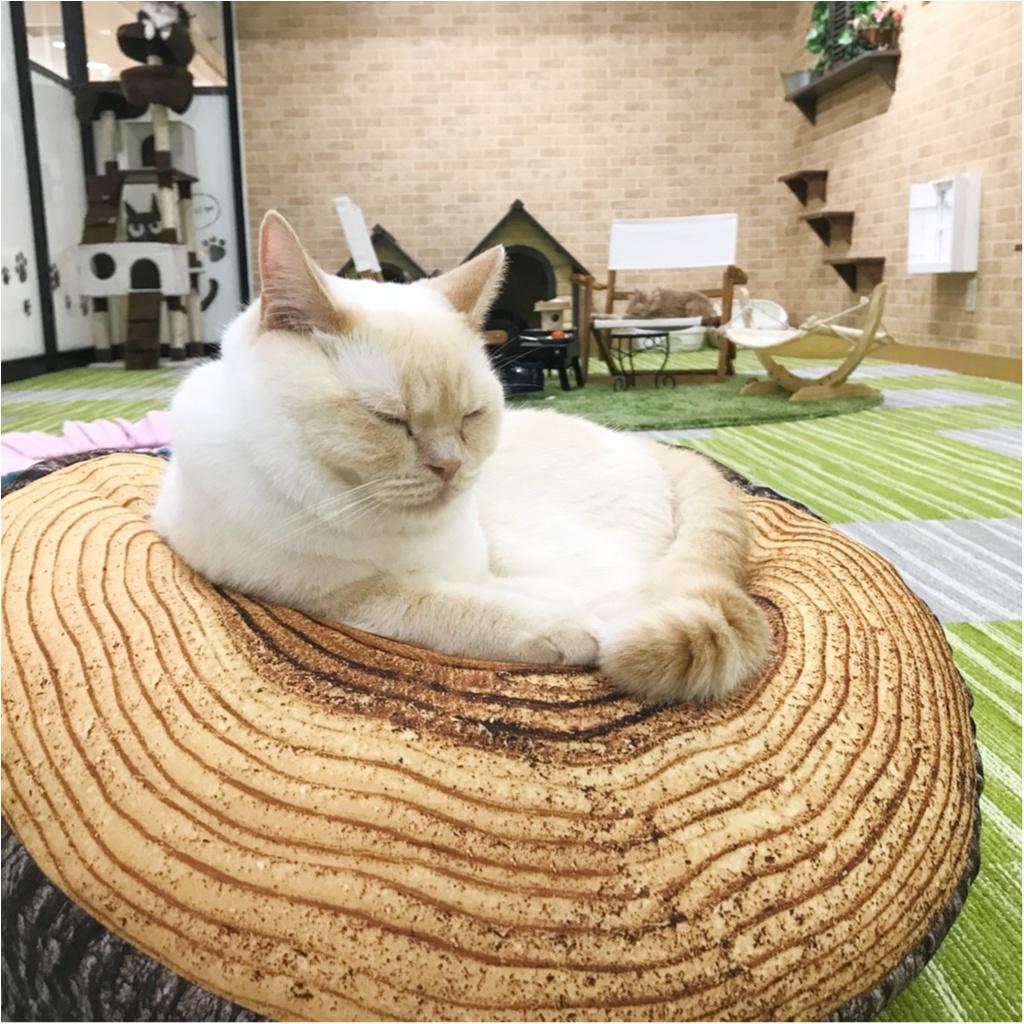 【空前の猫ブーム】首都圏内オススメの猫カフェ教えちゃいます!@横浜店レポ_3