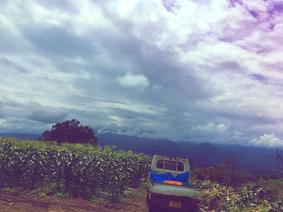 【HISバスツアー】60万本の奇跡!明野ひまわり畑と「清里テラス」&収穫体験ツアー_8