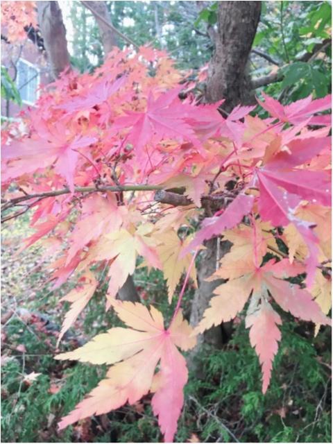 紅葉シーズン!!到来!!北海道の見頃は終わってしまいましたが…公園にいけば、もう少しだけ秋を感じられそうです♡_3