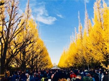 【紅葉スポット】美しすぎる黄色のトンネル《神宮外苑イチョウ並木》今が見頃です♡