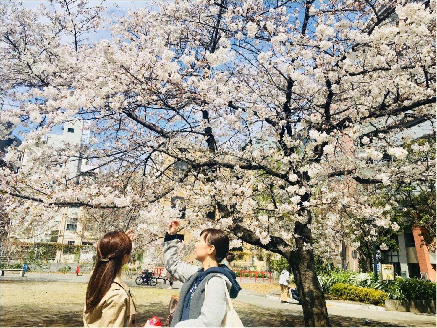 【お花見速報】東京は今週が見頃!?な桜事情_4