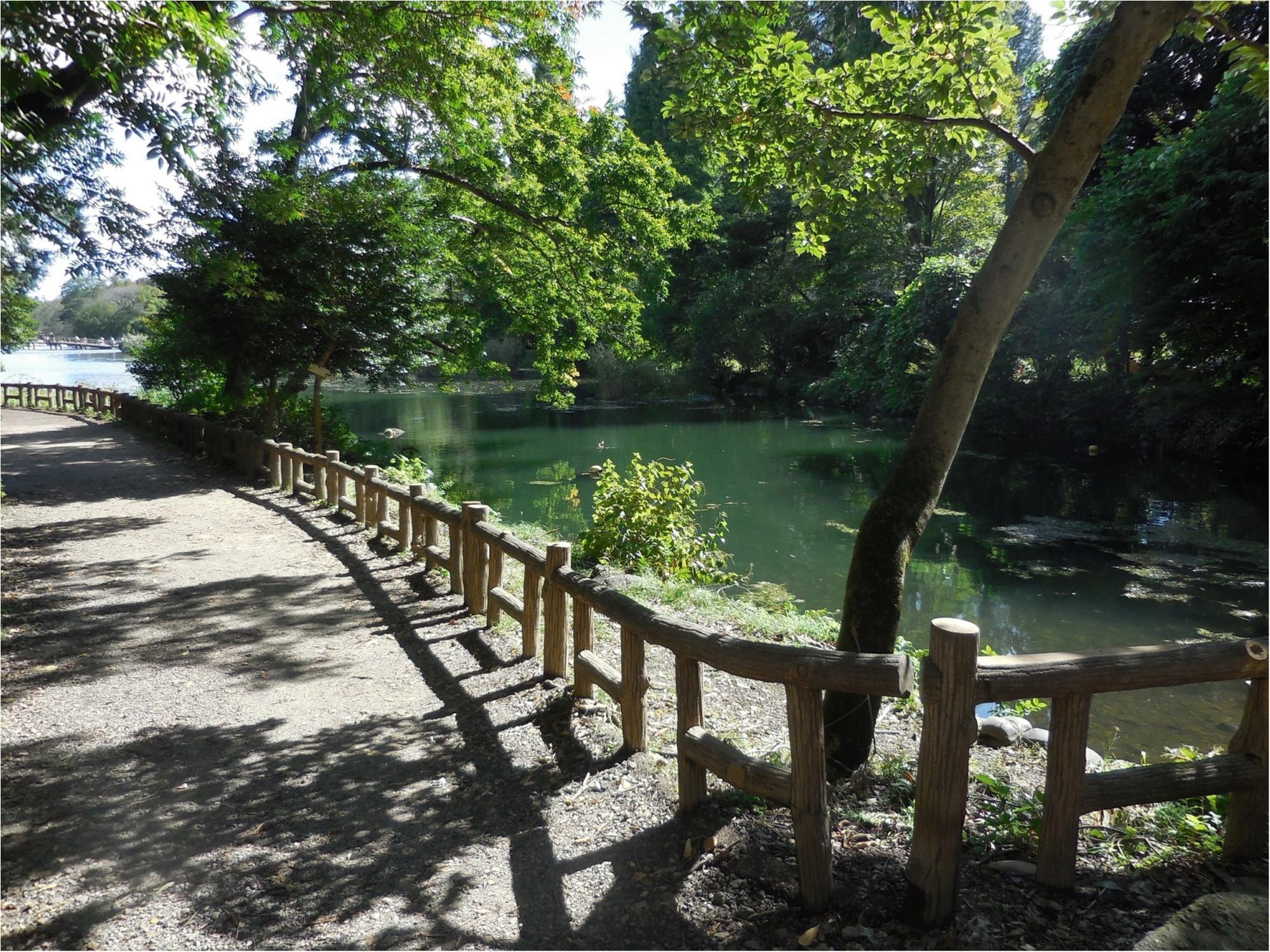 【吉祥寺井の頭公園】ひさしぶりに歩いてきました_2