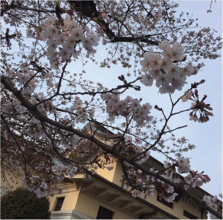 【4/6まで】都内でも七分咲き♪♪*千代田のさくらフェスティバル*に行ってきました✨✨_13