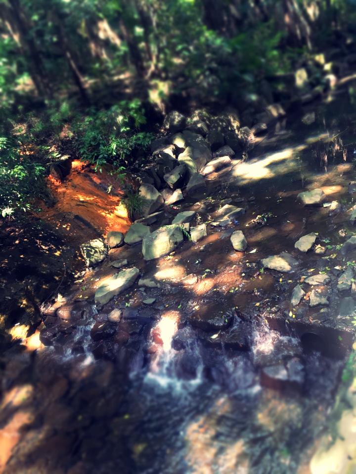 【癒しスポット】東京のオアシス。仕事に疲れたときは森林浴でリフレッシュ!_6