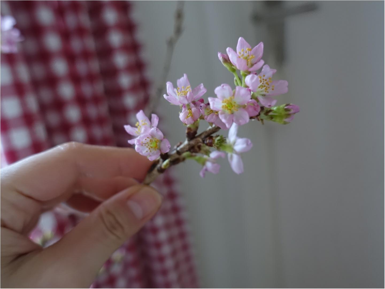 《花のある生活》一足お先に、お花見はいかが??自宅で出来るお花見はなんとワンコインで!_4
