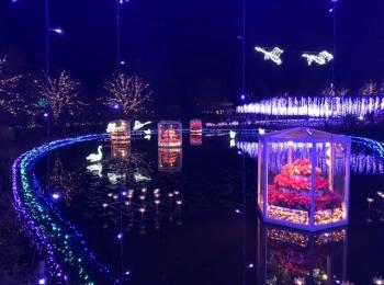 『あしかがフラワーパーク』のイルミネーションは、別世界の美しさ♪ 東京の手土産6選【今週のライフスタイル人気ランキング】