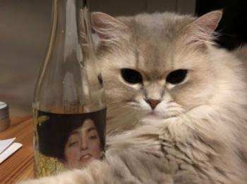 【今日のにゃんこ】「クリムト展 ウィーンと日本1900」のワインボトルを抱えるココンちゃん
