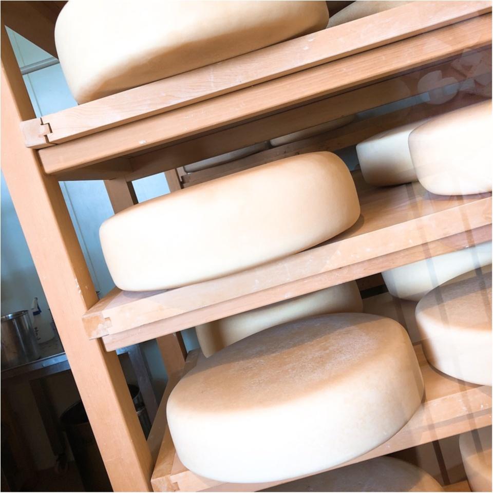 【チーズ好き必見!】日帰り軽井沢♡ランチはチーズが美味しい予約必須の人気店で☺︎_10